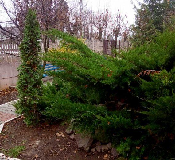 Декоративные растения для сада.